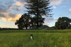 The field at The Solar Branco Eco Estate