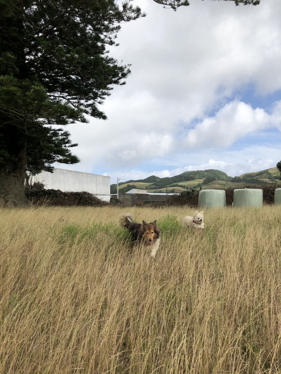 Penny and Rita in our field