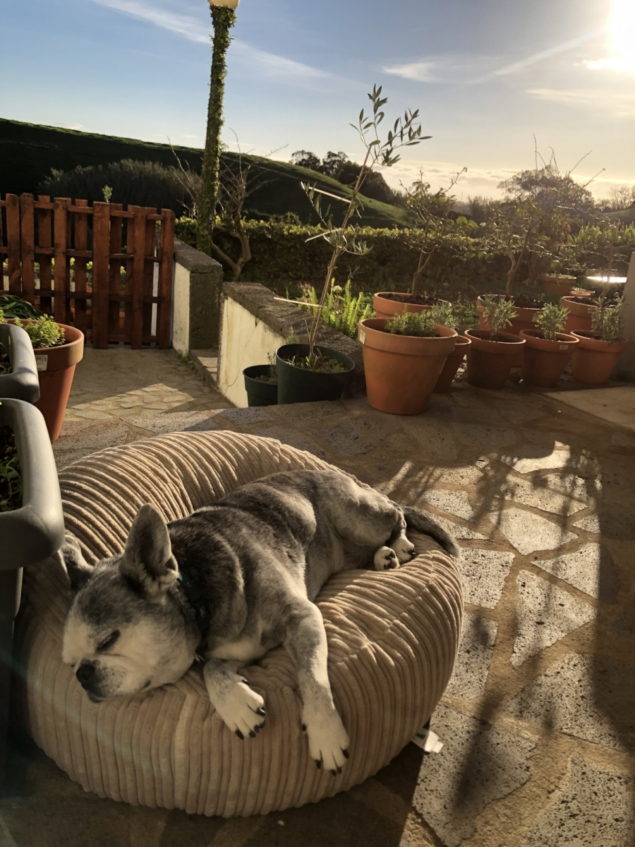 Padstow napping as the sun sets