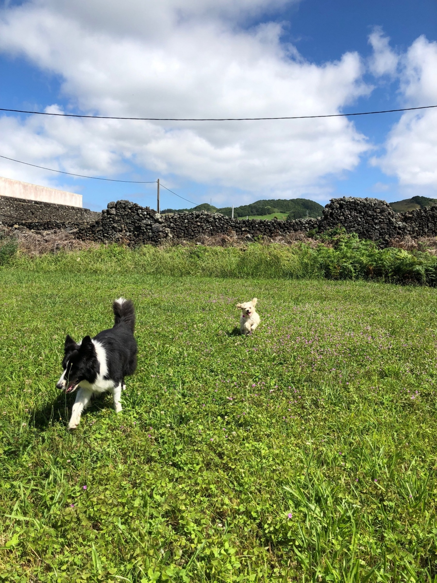 The dogs in the field