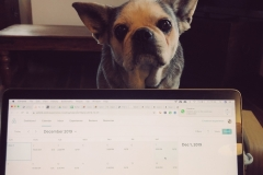 Who can get any work done, look at that face?