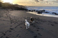 Ivy and Penny's first walk on the beach here in the Azores