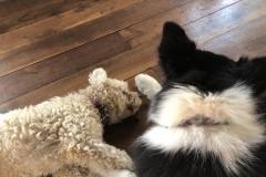 Rita and Una napping