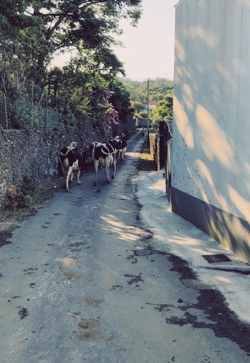 Traffic jam outside the Solar Branco Eco Estate