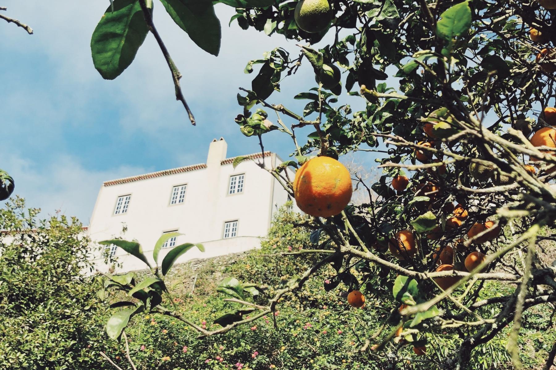 View through orange trees to the Solar Branco Eco Estate