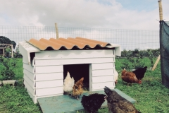 The ladies checking out Cluckingham Palace