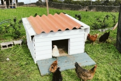 Our chickens checking out their new house
