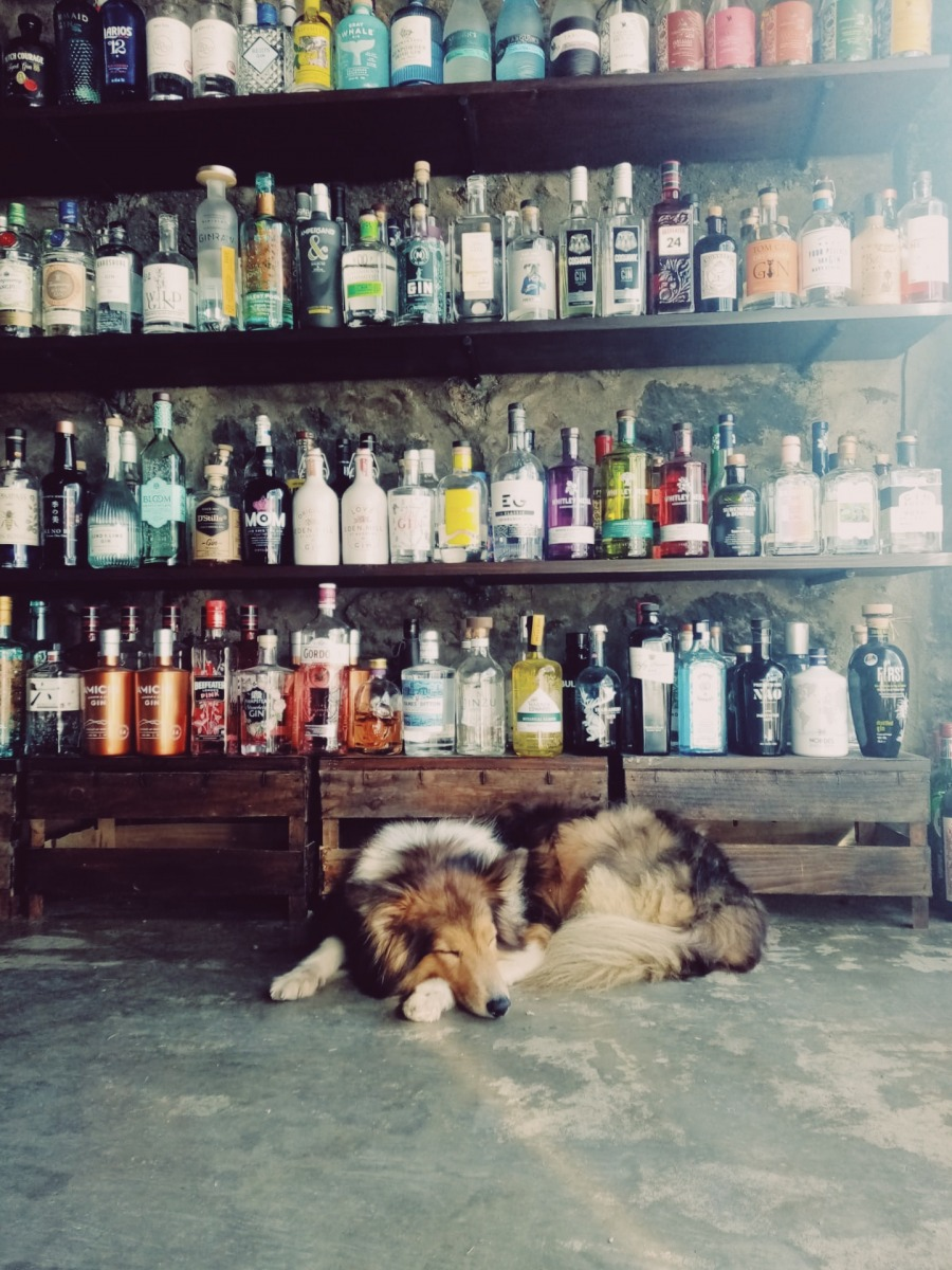 Penny napping in The Gin Library