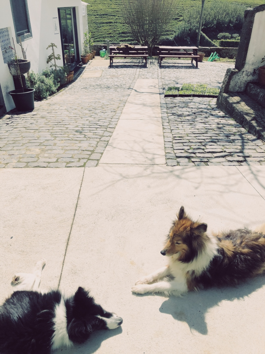 Our two greeters enjoying the sunshine