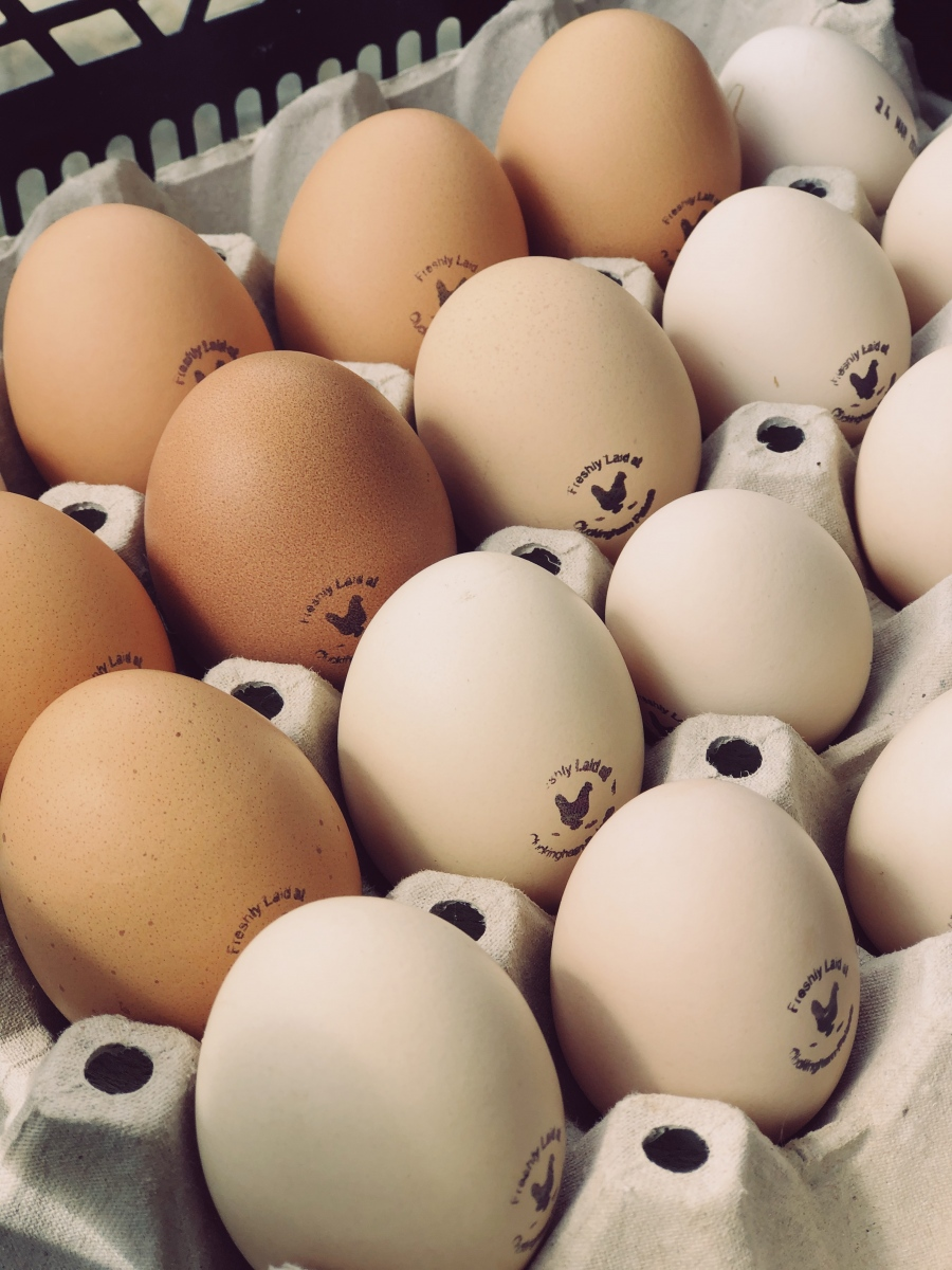 Fresh eggs from the estate