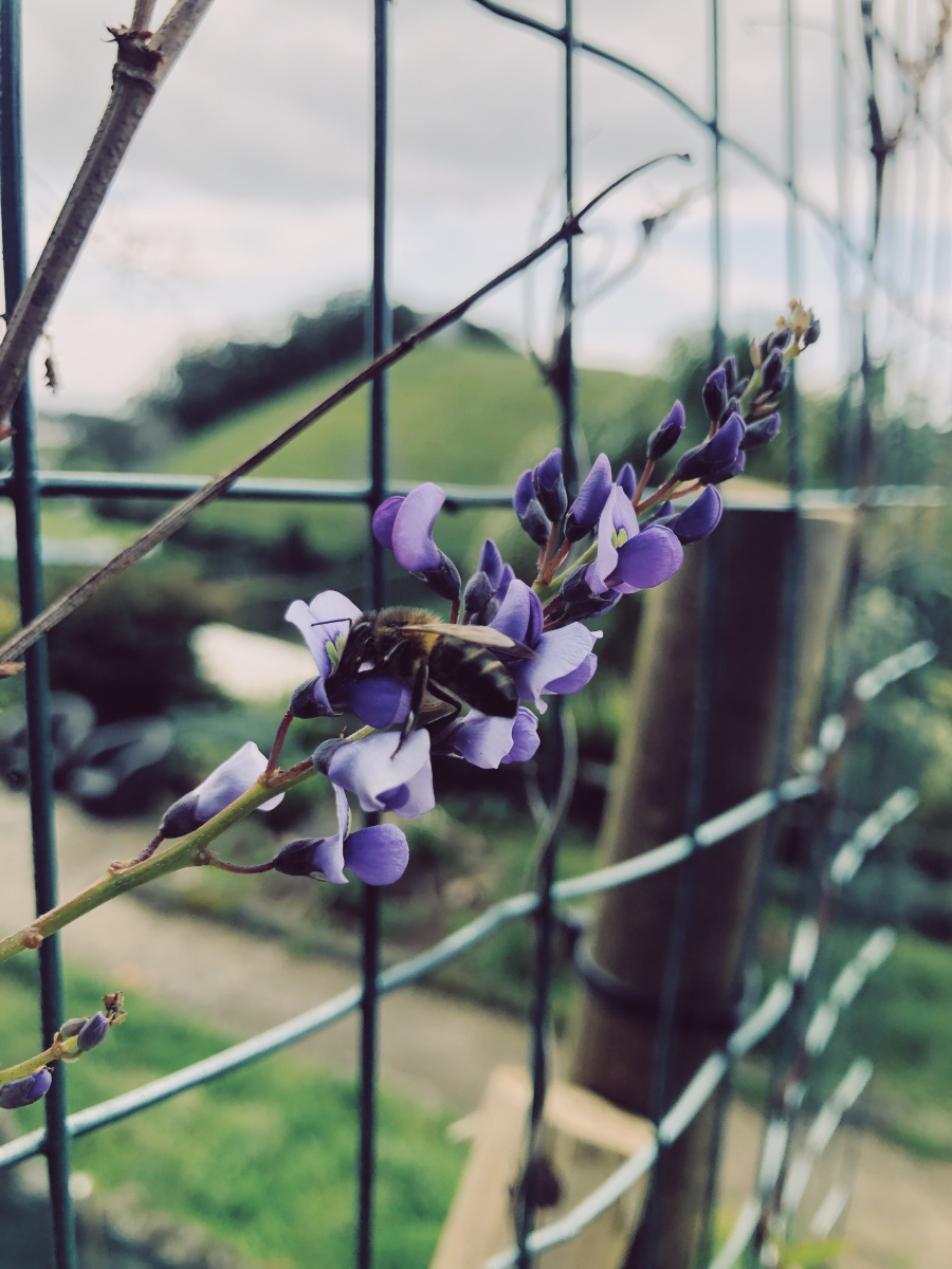 Spring is here and the bees are out