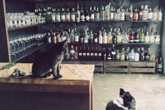 Chocolate, assistant at The Gin Library