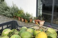 Fresh lemons for gin and tonics