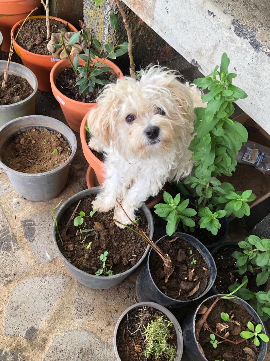 Planting a Rita