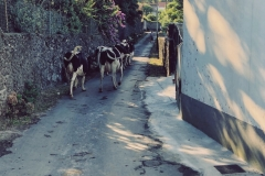 A traffic jam outside the Solar Branco Eco Estate