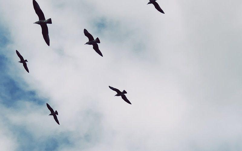birds in the sky above sao miguel