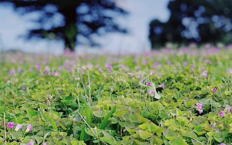 field view over the solar branco eco estate