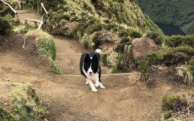 Una's hike in the Azores