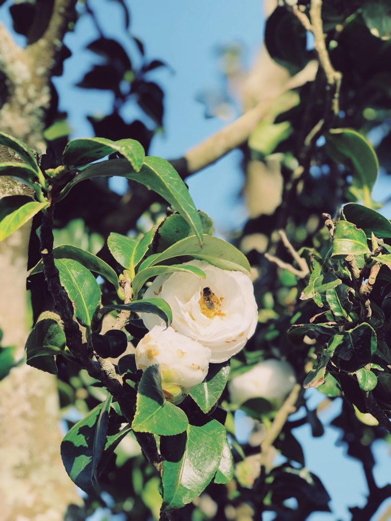 flowers at the solar branco eco estate