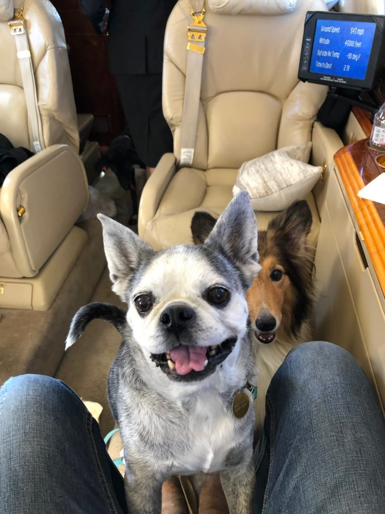 Dogs private jet to the Azores