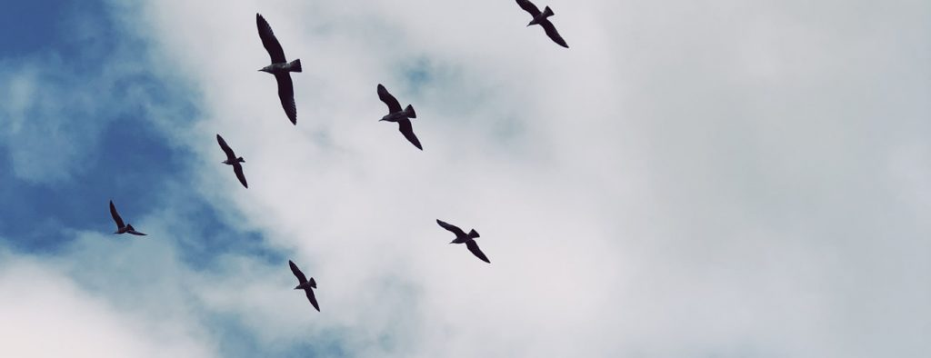 birds in the sky above sao miguel