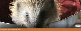 hedgehog-FB